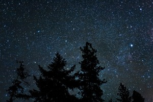 trees  silhouetted by the night sky,