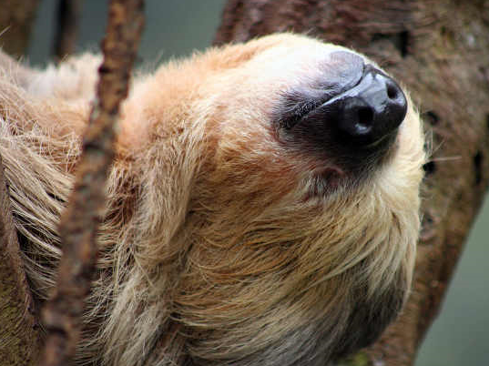 The sloth. I think we can all relate. If you're tired enough, it doesn't matter what direction your head is pointing.